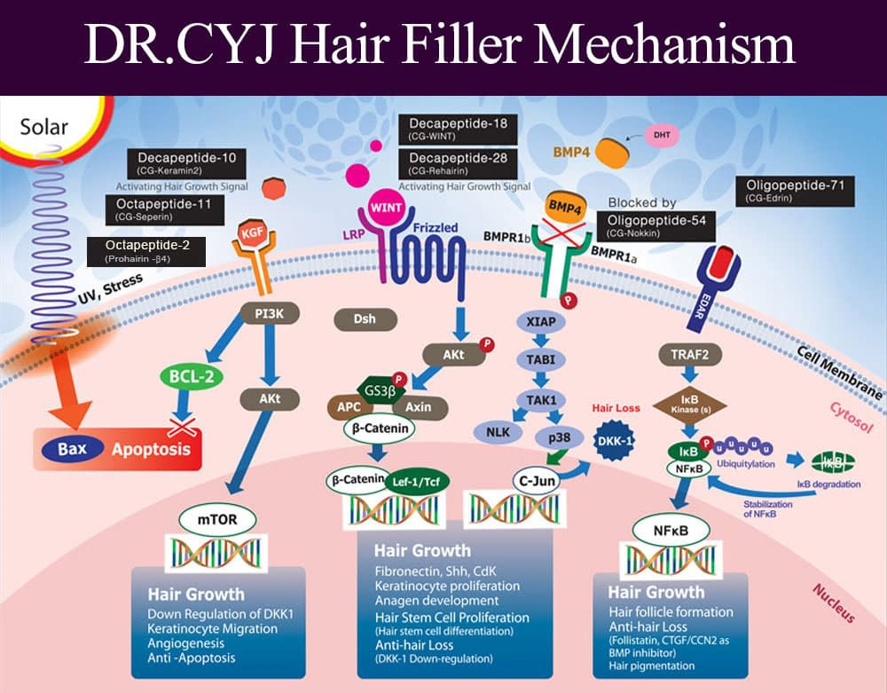 dr.cyj hair filler